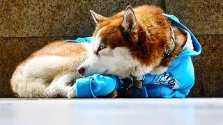 Каждый день собака в синей курточке приходит к торговому центру и кого-то ждет.