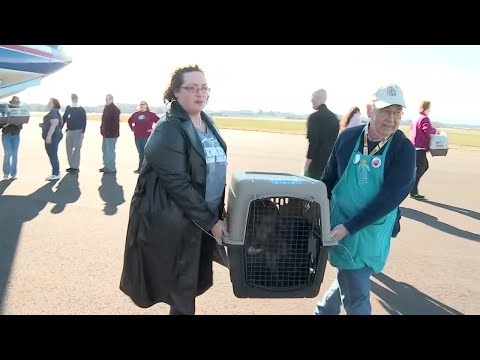 Cats and dogs from storm-ravaged Southeast arrive in Oregon