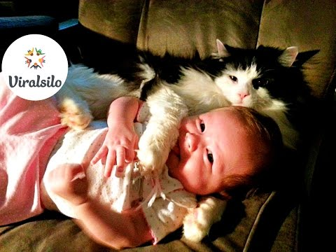 Cat takes care of baby compilation