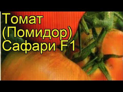 Томат обыкновенный Сафари. Краткий обзор, описание характеристик, где купить семена