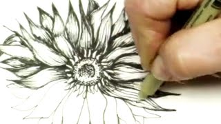 Pen & Ink Drawing Tutorial How to Draw a Sunflower - Inktober