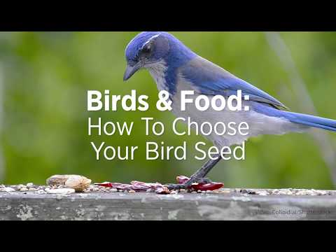 Birds & Food: How To Choose Your Bird Seed