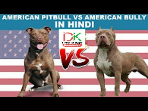 American Pitbull VS American Bully ? must watch in Hindi