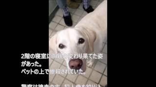 【感動】叱られても庭を掘り返そうとする犬が2年かけて伝えたかったこととは 鹿沼えり 検索動画 28