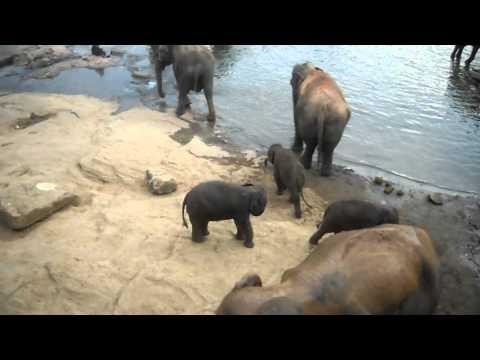 Cute - Baby Elephants having fun