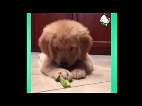 Cat/DogVideos Compilation 2016 –  Cute Cat/Dog Videos || Funny Vines