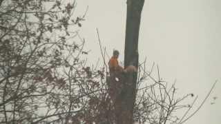 Dangerous job- lumberjack / Niebezpieczna praca- drwal