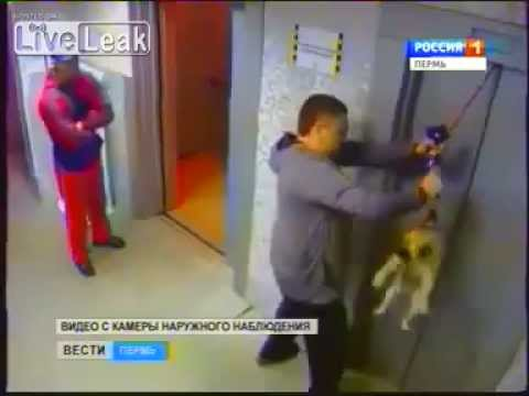 Man saves dog from death at the elevator LiveLeak
