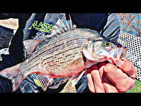 White Bass & Walleye Fishing | Wolf River, WI