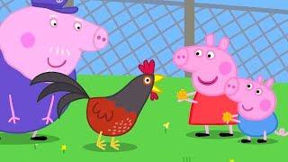Свинка Пеппа на русском все серии подряд | Пеппа и Джордж кормят кур | Мультики
