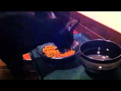 Nitro's voice 2 (black oriental funny cat)