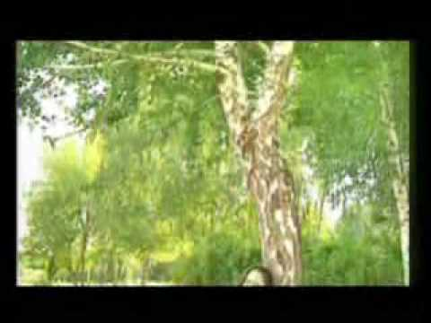 Bashkir song - Райля Масалимова Ултыртмагыз янгыз кайын.flv