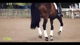 Лошади / кони  клип . Клип про лошадей  #2