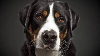 Как научить собаку лаять на чужих людей в частном доме?