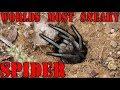 Worlds Most SNEAKY Spider - The Australian Wolf Spider