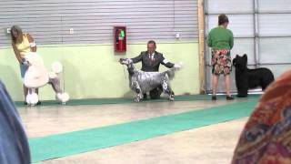 Conformation Dog Show 2014, Standard Poodle, Briard, Pug, Skye Terrier, Pomeranian High Five