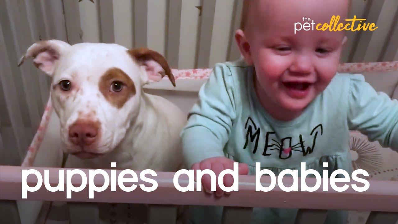 Adorable Puppies & Babies