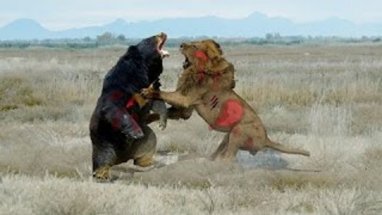 Peleas Animales 3 Youtube