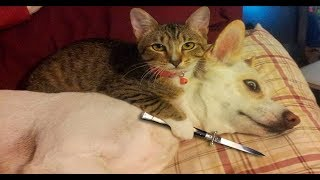 Cats and dogs funny videos