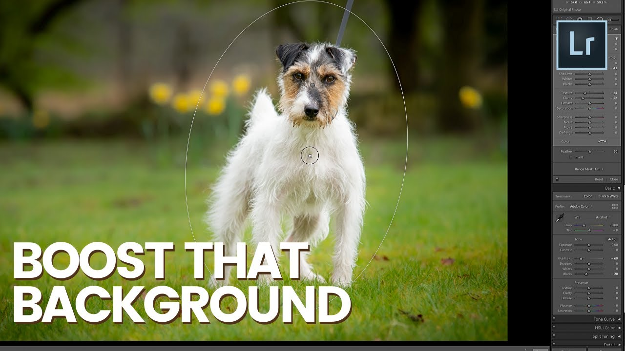 Download BOOST BACKGROUND WITH THE RADIAL FILTER in Lightroom - Episode 4 - Terrier Dog Photo Editing Series