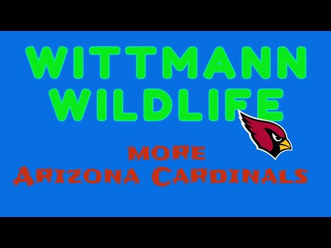 Wittmann Wildlife - More Arizona Cardinals