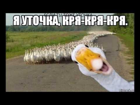 Клип Я - Уточка