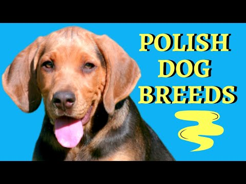 Polish Dog Breeds: The Pride Of Poland