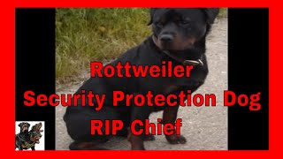 "Rottweiler, "" Chief "" Rip, The Best A Dog Could Be !"