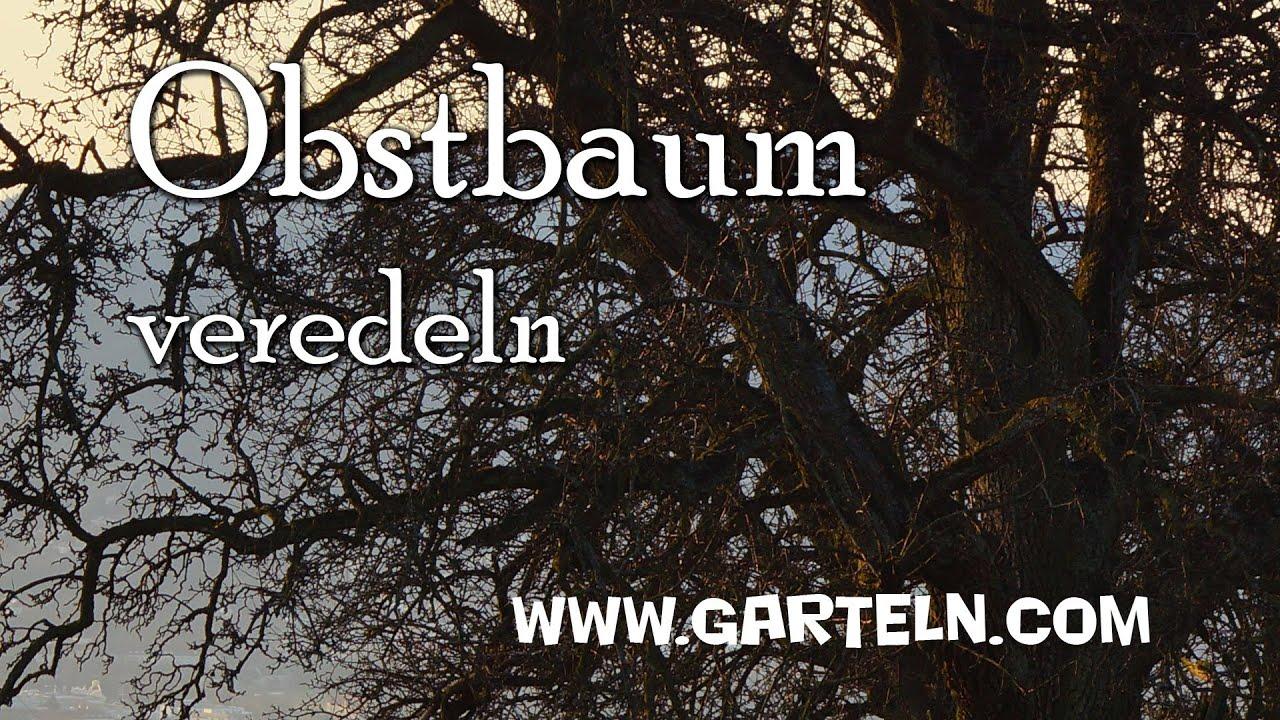 obstbaum veredeln youtube. Black Bedroom Furniture Sets. Home Design Ideas