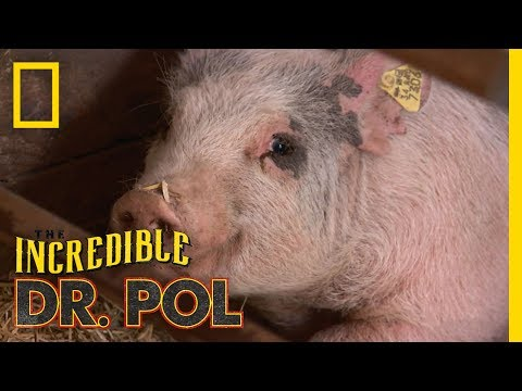 The Incredibly Busy Doctors Brenda and Emily | The Incredible Dr. Pol