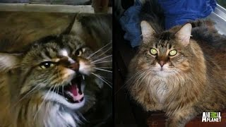 How Do You Like Meow: Barnabus   My Cat From Hell