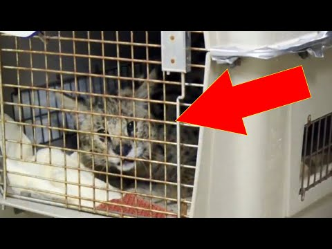 Rescuers Find Crate Dumped On Their Doorstep With The Strangest Creature Hiding Inside