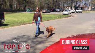 Dog Training Clay's Top Dog Conway Arkansas