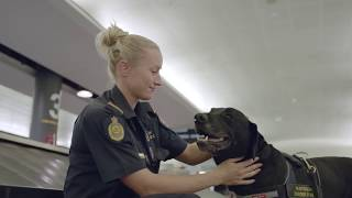 A Day in the Life of Airport Detector Dogs