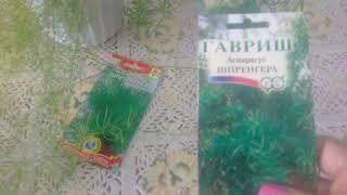Аспарагусы из семян