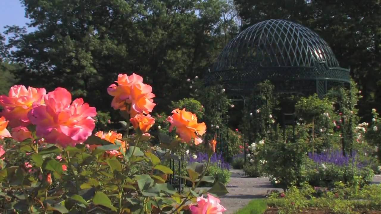 Most Beautiful Rose Gardens In The World the peggy rockefeller rose garden - youtube