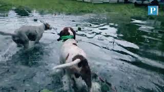 Voluntario rescató a seis perros encerrados en una jaula inundada por el huracán