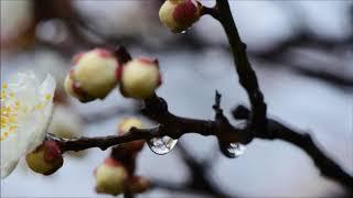 雨とルージュ 氷川きよし cover nakagawa