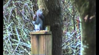 Squirrel Shooting On A New Feeder