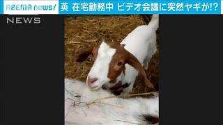 """ビデオ会議を楽しく!""""サプライズゲスト""""が大人気(20/06/04)"""