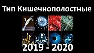 4. Кишечнополостные  (7 класс) - биология, подготовка к ЕГЭ и ОГЭ 2020