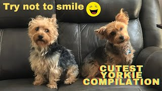 Cute and funny Yorkie compilation 2021.  Silly animal videos! Cute puppies and dogs.