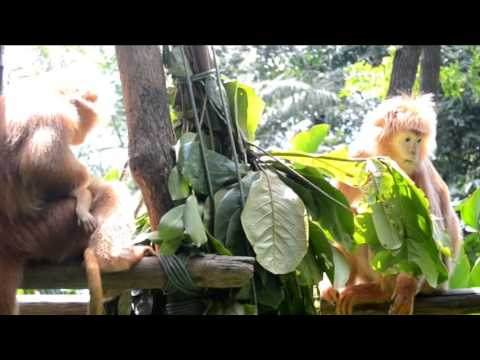 viaje a Malasia, Singapur e Indonesia Java y Bali 2016