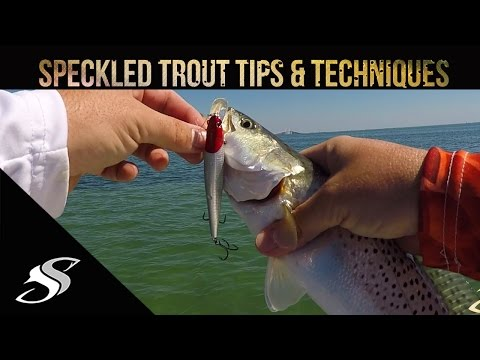 hookup baits for trout