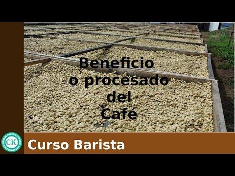 Beneficio o procesado del Café- Curso Barista. Cap. 5