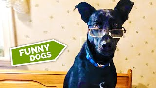 Daily Dose of Animals #6  • Cut & Funny Pets Videos 🐾