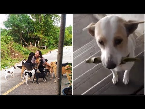 A stray dog has s a good manner to get his meal, wish to be adopted soon