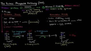 con đường pentose phosphate giới thiệu v pha oxy ha hs19 80