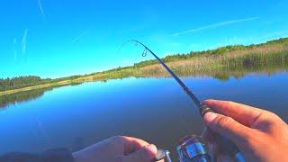 Как поймать 150 РЫБ за утро - конечно МИКРОДЖИГ! Рыбалка на спиннинг с лодки летом! Ловля окуня!