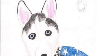 Time Lapse Art Series - Speed Drawing: Siberian Husky Smokey The Bandit
